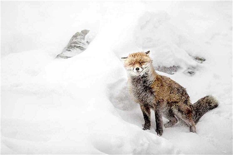 Красота дикой природы, изображение №10