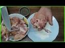 Como Hacer Muslitos de Pollo Bocaditos