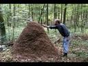Муравьи: тайная сила природы / Ants: Natures secret power (Австрия, 2005)