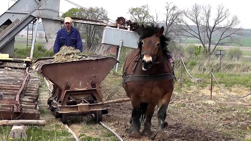 Cegielnia Bojanice - korzystająca z pomocy konia