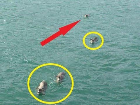 Плавая на лодке в море ОН и не поверил своим глазам, когда увидел ЭТО!