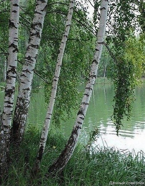 Природа лечит душу красотой.. И делает нас чуточку счастливей...