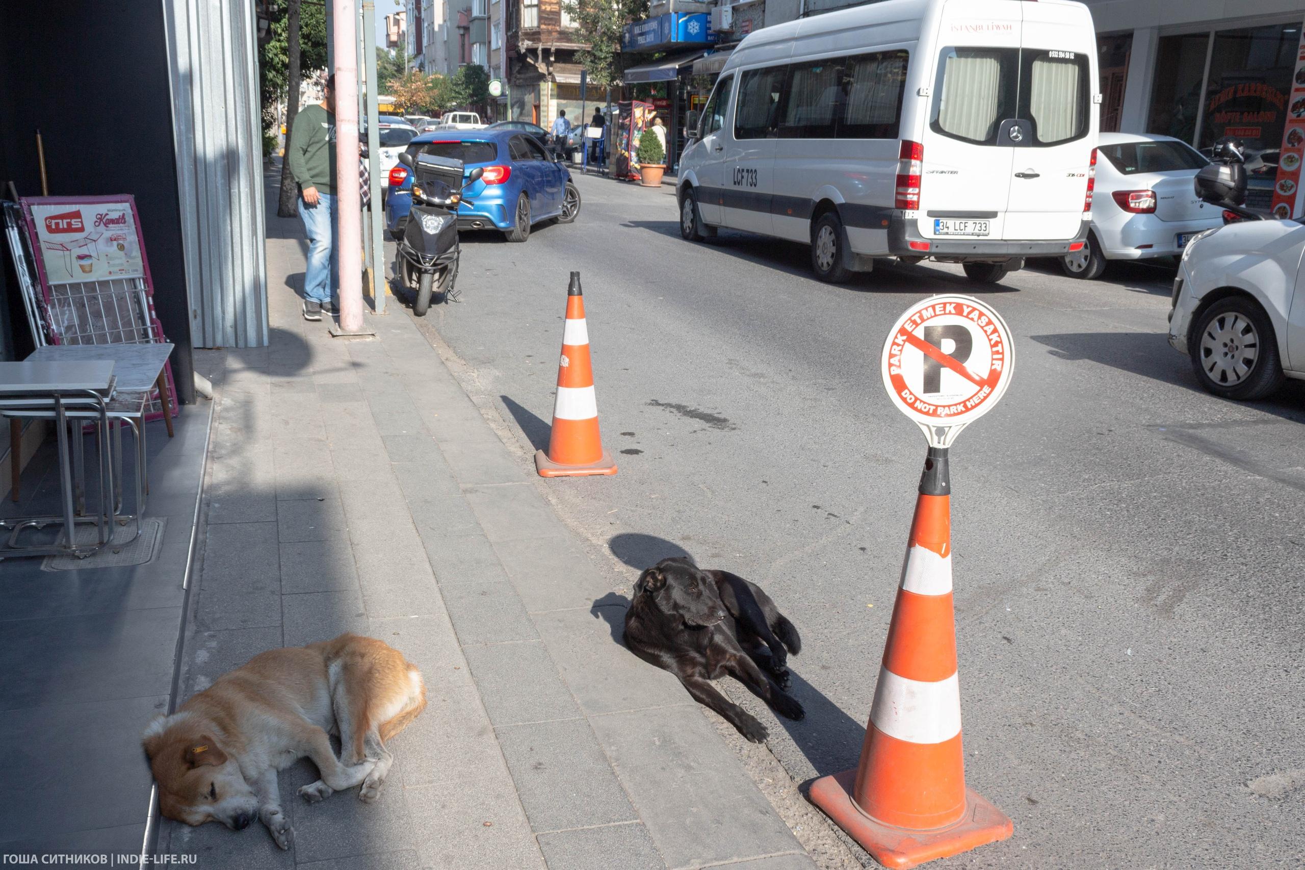Псы на парковке