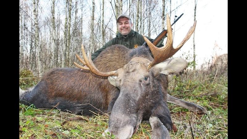 Охота на лося кабана и косулю. Охота в Республике Беларусь часть 2.