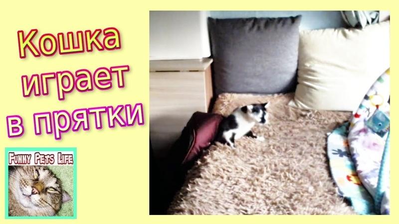 Приколы с котами. Кошка прячется везде. Трусливая кошка Мурза.