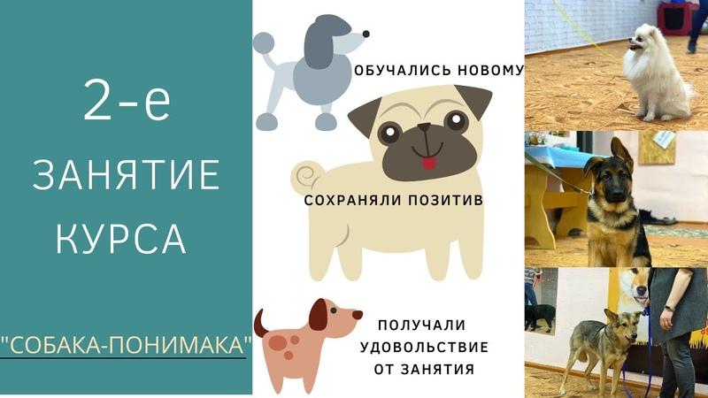 2 занятие курса Собака понимака