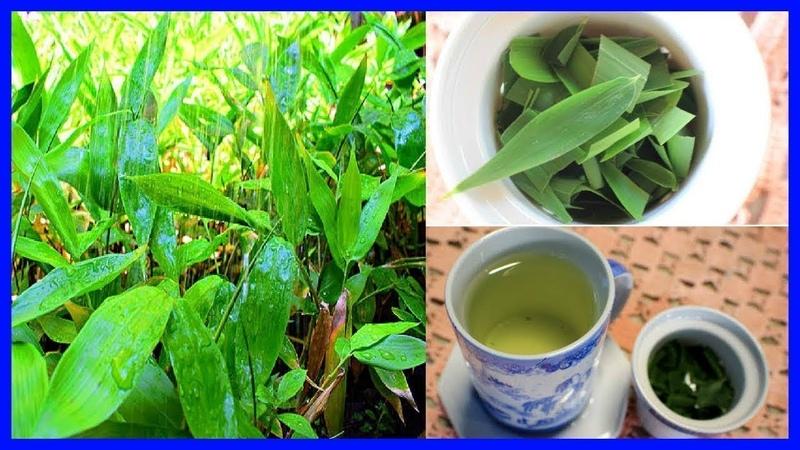 Conoce los beneficios del Bambú Coreano Para tu Salud