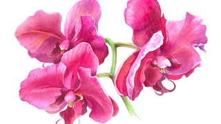PINK ORCHIDS PAINTING 🌺  Botanical Watercolor on Winsor & Newton COLD Pressed Paper
