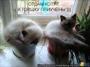 Веселые картинки. Самые смешные котята и коты.
