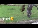 14 Смешных обезьян и 88 бананов
