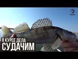 Судачим / В курсе дела / №41