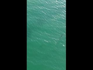 Дельфины в Благовещенской