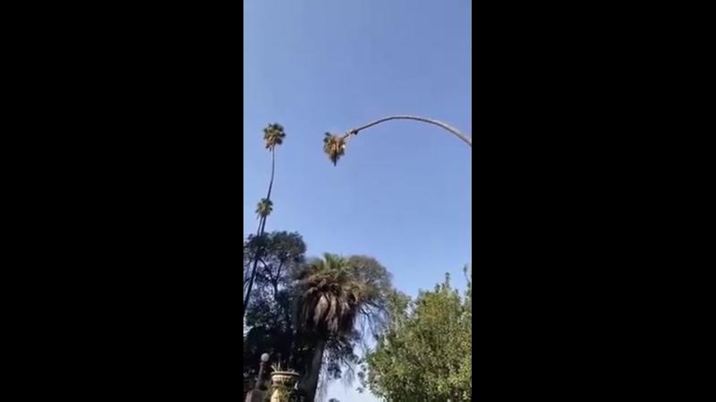 Обрезка пальмы на огромной высоте дикая амплитуда раскачки верхушки