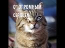 Особенный кот Кузьма