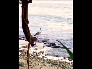море цапля дебюсси