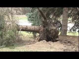 В Пензенской области устраняют последствия урагана