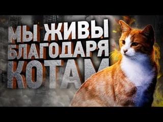 Как кошки тайно спасают нам жизнь