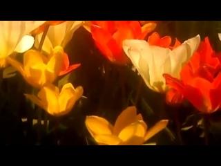 Gelvetta  Alёna Nice - Desire to Live (Constantine Kashirin Remix)