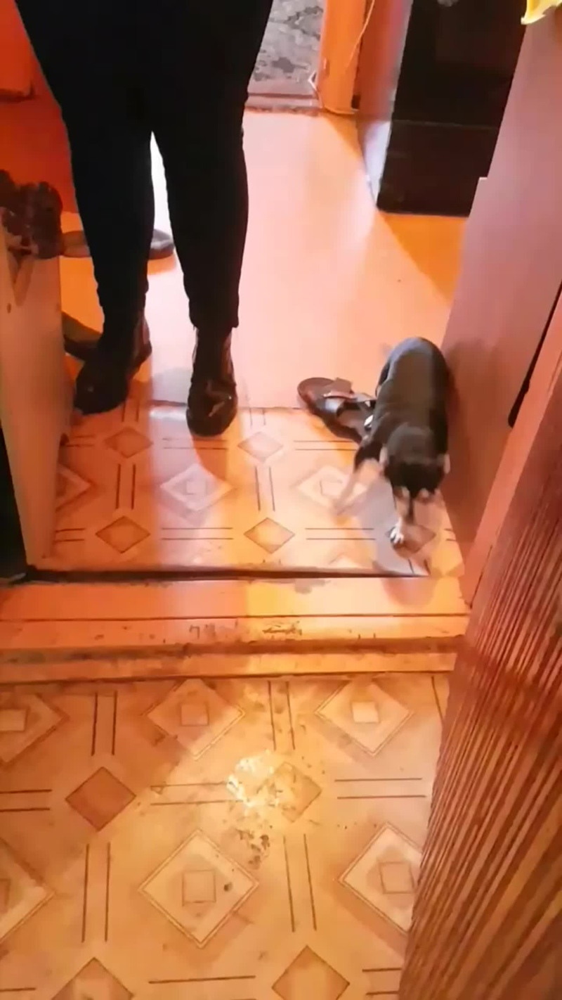 летучую мышь на балконе нашли в ноябре)