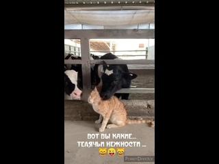 Говорит ТРЁХГОРНЫЙ kullanıcısından video