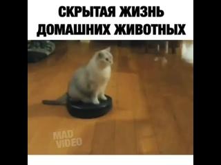 кот вообще борзый, как царь ездит по квартире.. ещё и камеру рассекретили
