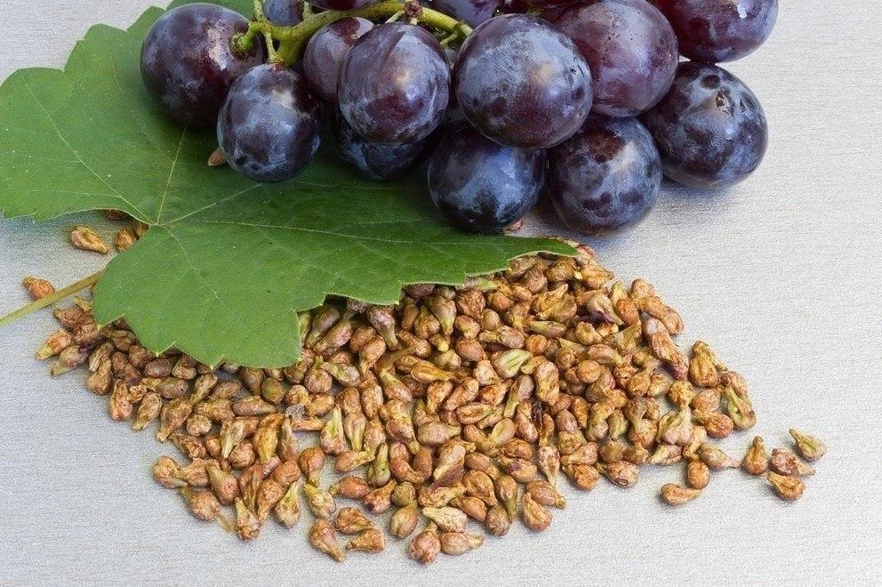 Плодовые косточки иногда полезнее, чем сами фрукты 6Z0lEGBGKmo