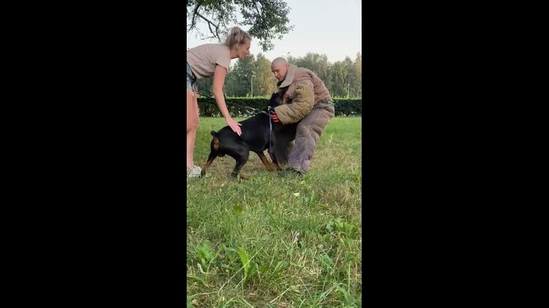 Видео от Дрессировка собак СПб Кинолог Артур Огарев