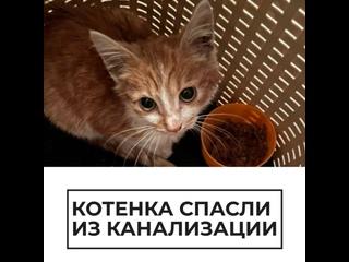Котенка спасли из канализации