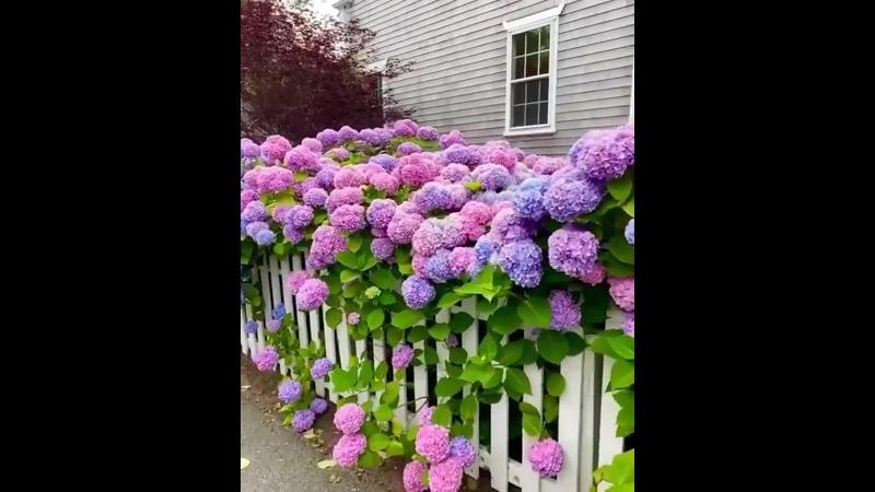 Красота из живых цветов жилого дома Взято из ГОСТдеп