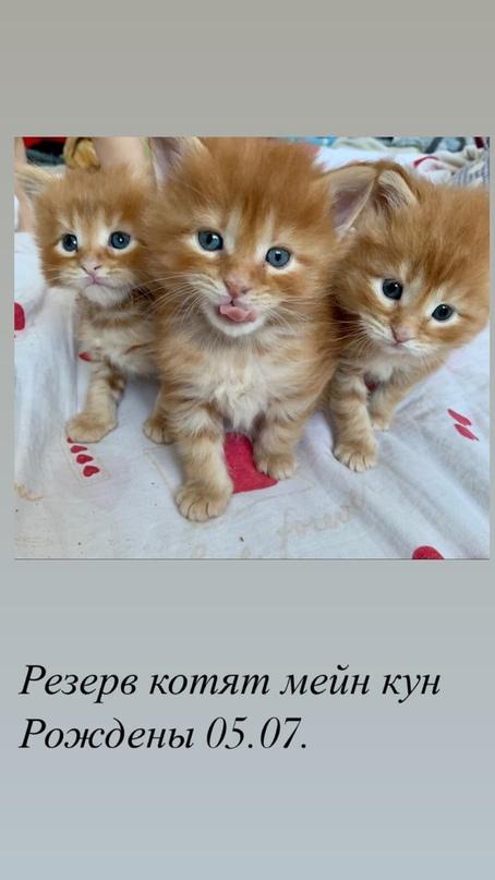 Информация в личку комментарии не | Объявления Орска и Новотроицка №27710