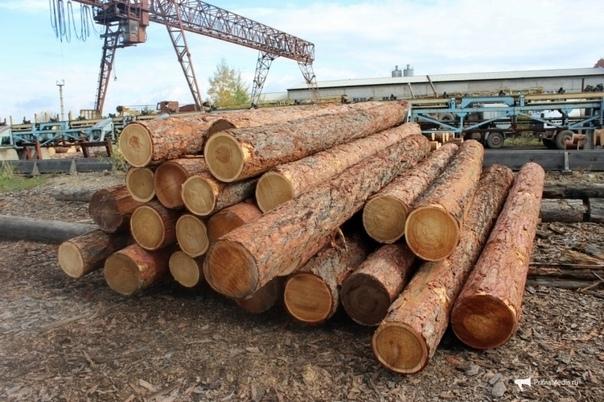 Вывоз леса-кругляка с Дальнего Востока в Китай выр...