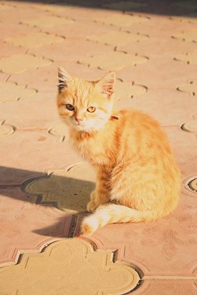 Потеряшка‼️Может у кого-то пропал котёнок-рыженьки...