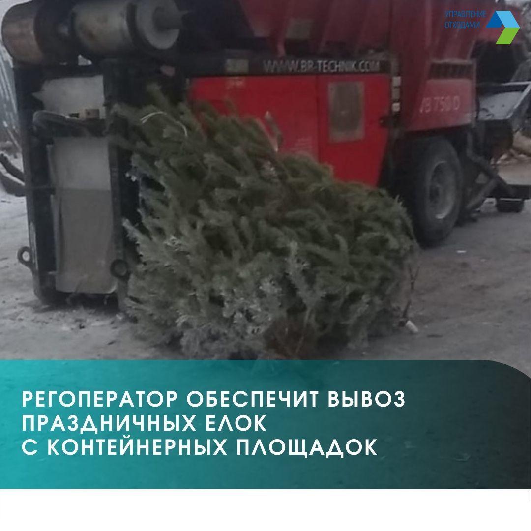 Региональный оператор напоминает о вывозе ёлок из мест накопления крупногабаритных отходов