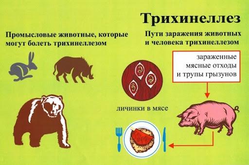 Отравления. Что нужно знать о мясе диких животных?, изображение №3