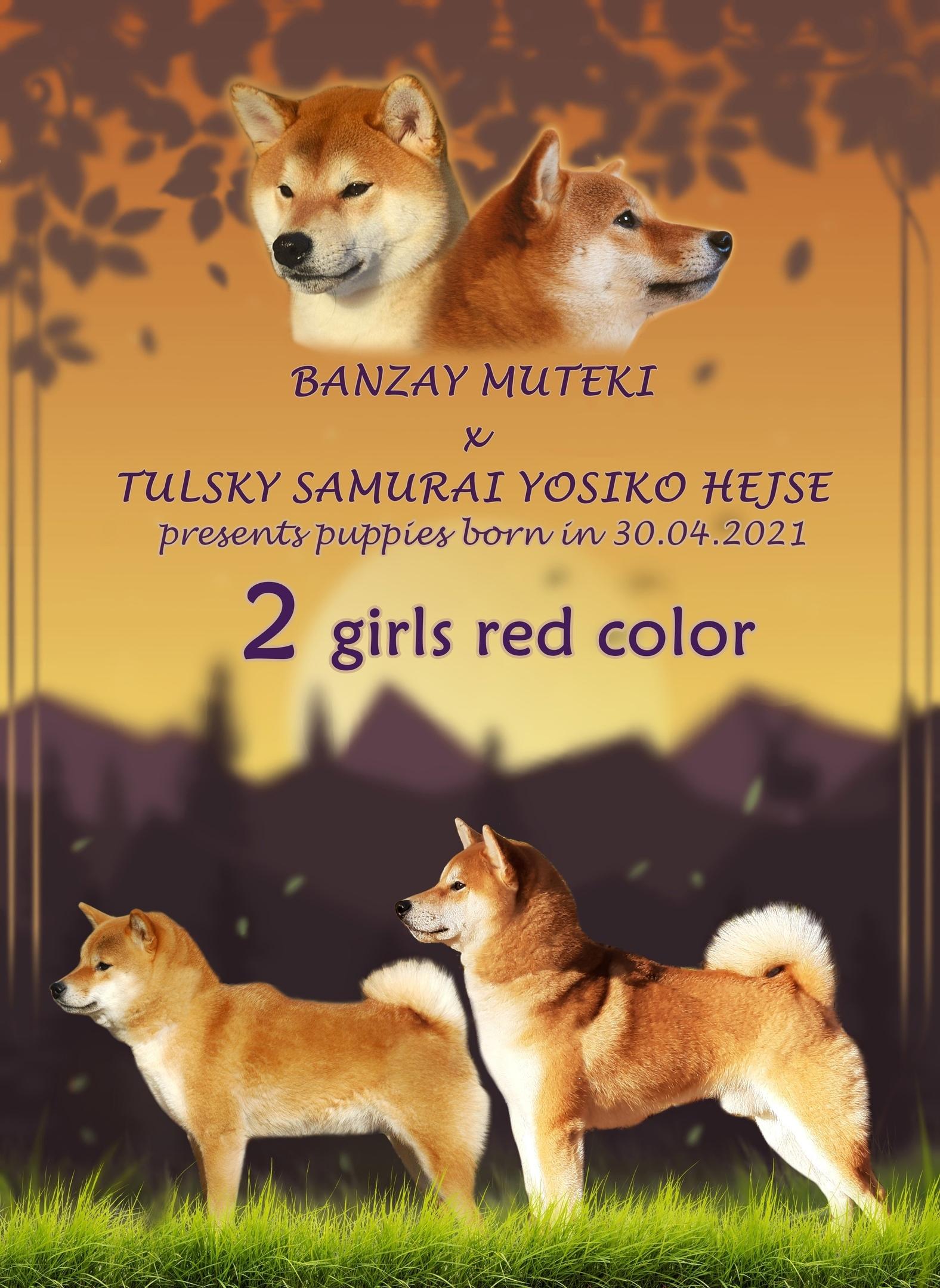 BANZAY MUTEKI Zicn3WTYd8U