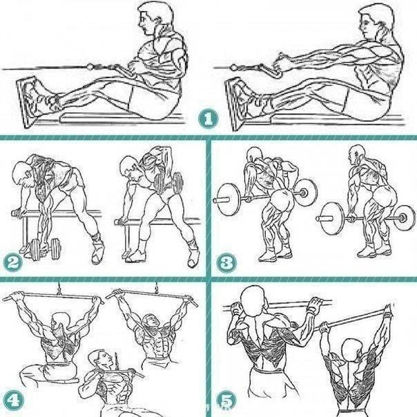 Тoп пять упpaжнeний для мышц cпины: