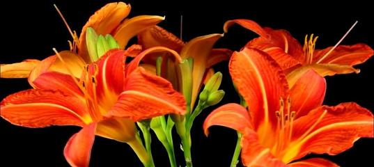 Красивая музыка (танец цветов под вальс) !!!
