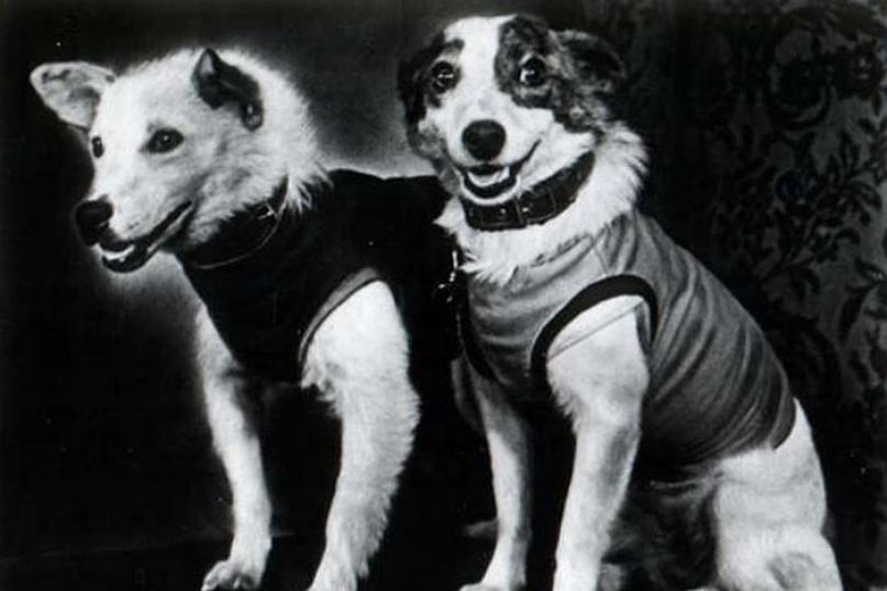 19 августа 1960 года мир потрясла сенсация: советские собаки Белка и Стрелка поб...