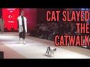 Cat slayed the catwalk