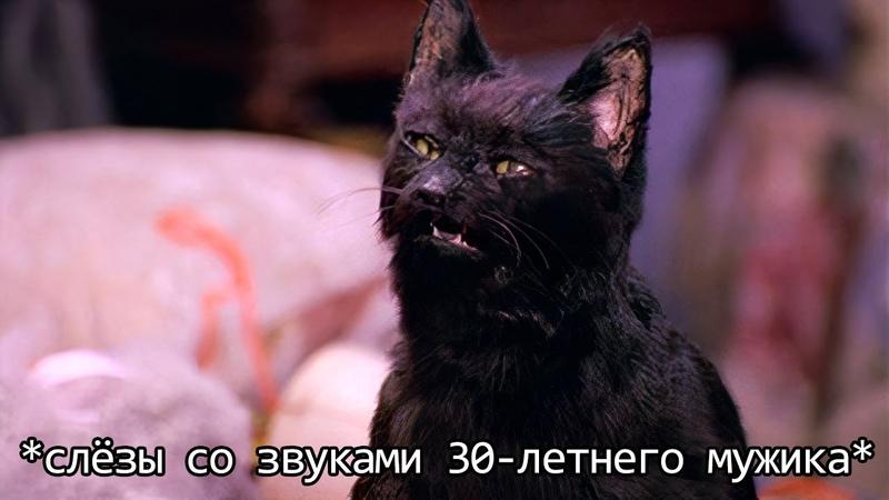 Если бы кошки могли говорить Кот Сэлем обычный домашний кот Переозвучка
