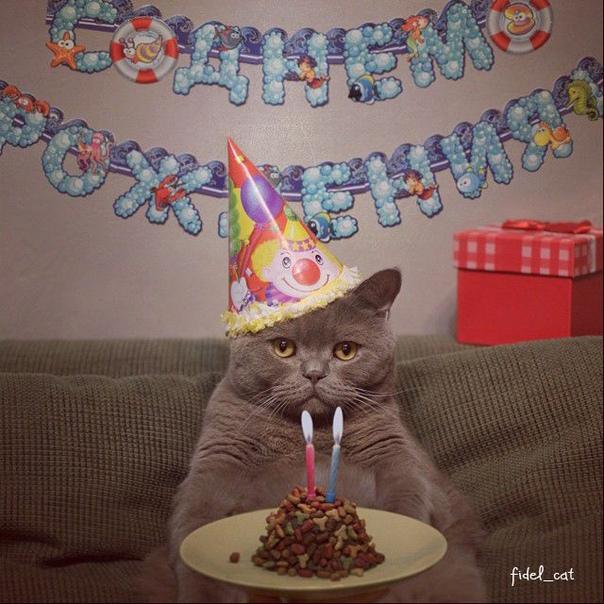 картинки шуточные о своем дне рождения несколько занимательных
