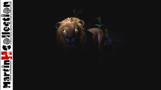 MartinH Collection - Safari Ltd. Lion, Wildlife Wonders - video review