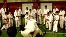 Kyokushin Karate Hanshi István Adámy 18.04.2009