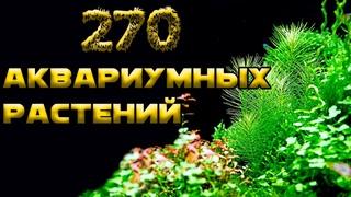 ТОП 270 АКВАРИУМНЫХ РАСТЕНИЙ
