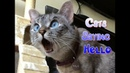 Compilation Funny Cats Saying Hello