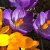 Клуб ЦветоМанов Росток|Растения.Цветы.Подставки