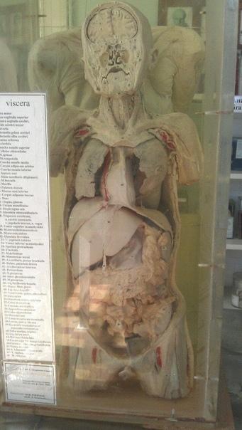 Институт анатомии. Натуральные образцы, погруженные в формалин.