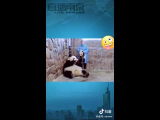 В китайском зоопарке мама-панда променяла своего детеныша на яблоко. Ох и мама!