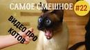 Самое Смешное Видео Про Котов. FUNNY CATS. Приколы про кошек.
