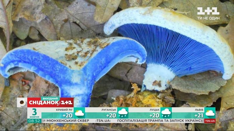 Найдавніші мешканці планети цікаві факти про гриби й правила їх вживання